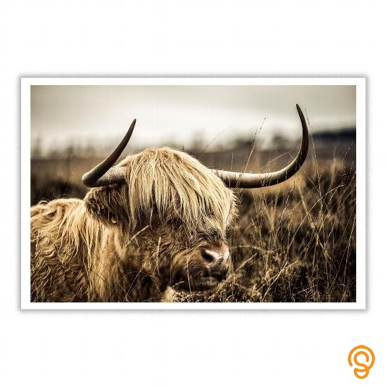 movement-highland-cow-poster-t-shirts-review